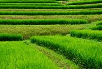 Chihayaakasaka of rice terraces Stock photo [969330] Rice