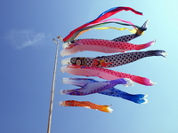 Carp streamer Stock photo [969470] Carp
