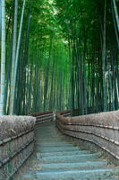 Small diameter of the bamboo forest Stock photo [969469] Bamboo