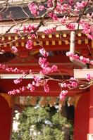 Dazaifu of plum Stock photo [1076680] Dazaifu
