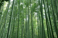 Bamboo forest Stock photo [1077438] Kyoto