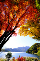 Autumn leaves and Kawaguchiko Stock photo [1078646] Autumn