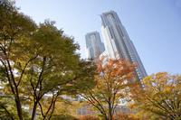 Tokyo Metropolitan Government building Stock photo [1082195] Tokyo