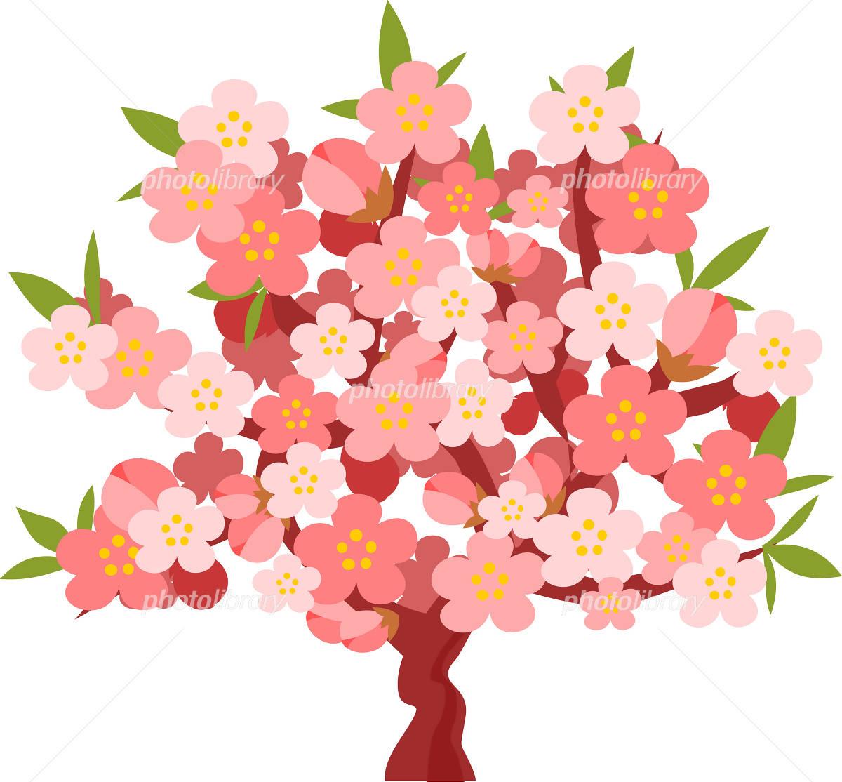 桃桃の木桃の花 イラスト素材 1183023 フォトライブラリー