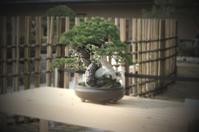 Bonsai Stock photo [1179104] Bonsai