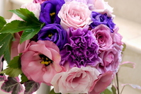 Purple carnations and Turkey bellflower Stock photo [1180892] Carnation