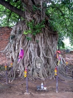 Brain of Buddha that was incorporated into the linden tree in Thai Ayutthaya Stock photo [1181076] World