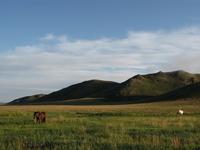 Horse of Mongolia grassland Stock photo [1181188] Horse