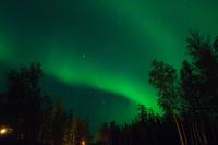 Aurora and forest Stock photo [1181236] Aurora
