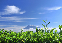 Tea leaves and Fuji and blue sky Stock photo [1184198] Mt.