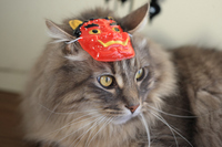 Cat wear the face of the demon Stock photo [1188459] CAT