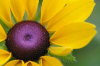 Sunflower Stock photo [1189351] Princess
