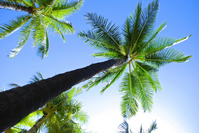Palm Stock photo [1189724] Palm
