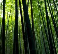 Bamboo forest Stock photo [1190642] Sagano