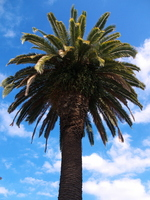 Phoenix and blue sky Stock photo [1191404] Phoenix