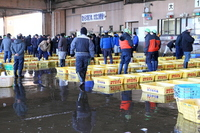 Auction in lively jar Choshi fish market Stock photo [1193551] Fish