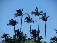 Palm Stock photo [38272] Palm
