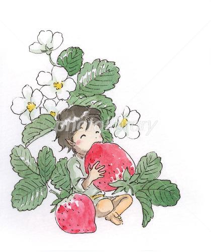 苺を食べる小人 イラスト素材 1286806 フォトライブラリー