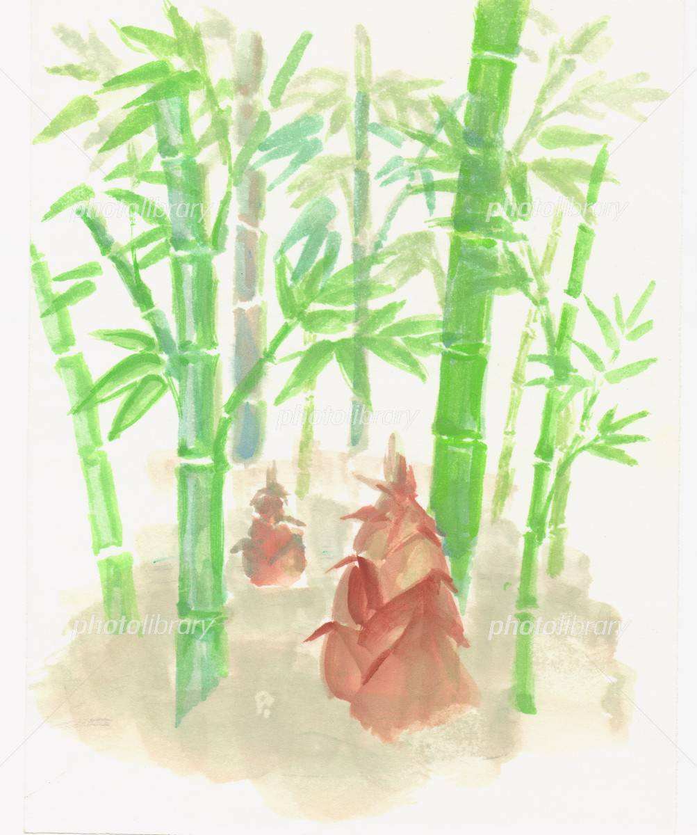 竹の子 イラスト素材 1288173 フォトライブラリー