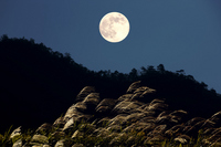 Japanese pampas grass and full moon Stock photo [1282396] Japanese