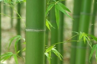 Sagano of bamboo forest Stock photo [1282520] Bamboo
