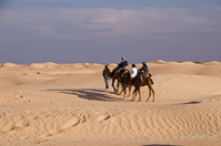 Tunisia Sahara and tourism camel Stock photo [1284610] Tunisia
