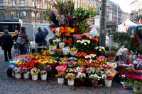 Italy Milan Duomo nearby florist Stock photo [1289571] Italy
