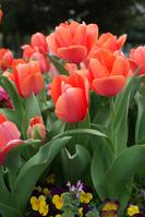 Spring Mitsuzawa park Stock photo [1368111] Spring