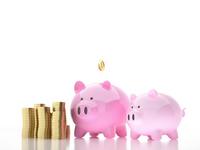Savings [1368959] Pig