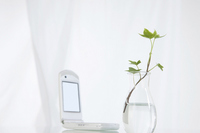Ivy Stock photo [1373090] Desk
