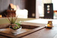 Mini bonsai Stock photo [1376384] Bonsai