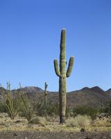 Cactus Stock photo [1378203] Cactus