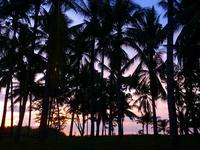 Cebu Island palm Stock photo [1458171] Palm