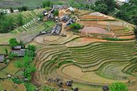 Vietnam Sapa Rice Terraces Stock photo [1461138] Vietnam