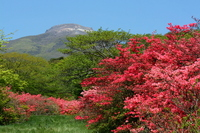 Nasu Mountain and Yahata azalea Stock photo [1462995] Nasu