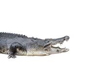 Crocodile Stock photo [1466000] Crocodile