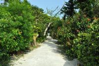 Landscape of Yubu Stock photo [1466458] Okinawa