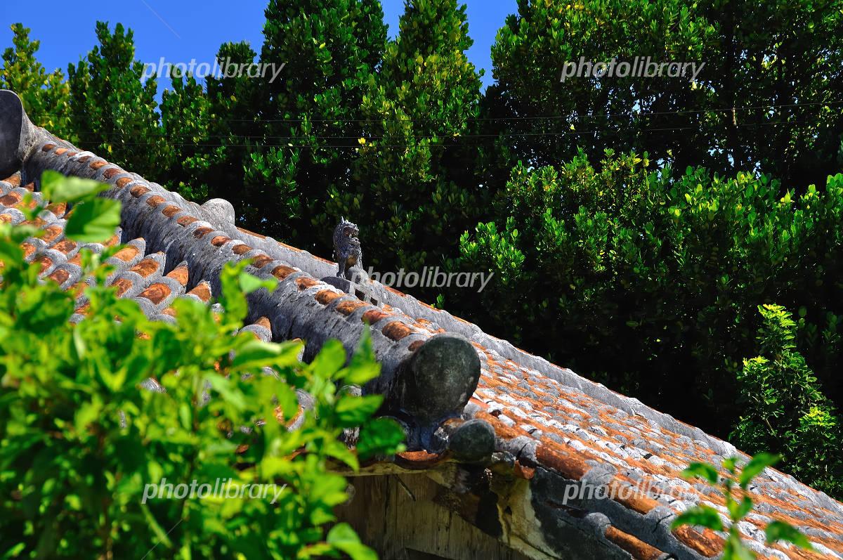 Red tile and Shisa of Kume Island Photo