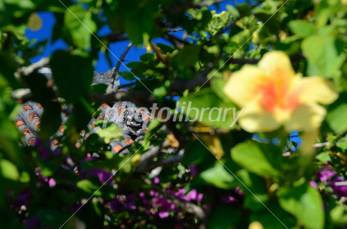 Scenery of Taketomi island Photo
