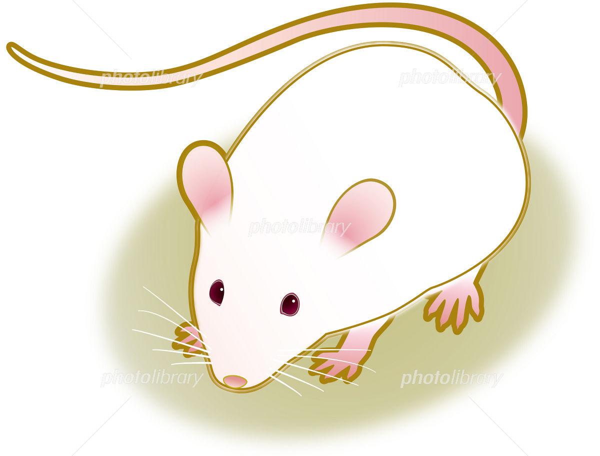 ハツカネズミの画像 p1_17