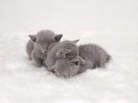3 kittens sleeping Kitten