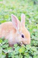 Rabbit Rabbit