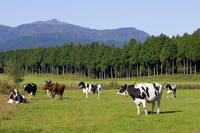 Ranch and cattle Stock photo [1560054] Ranch
