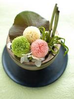 Arrangement of Pinponmamu Stock photo [1560682] Pinponmamu