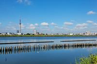 I face the Tokyo Sky Tree and residential area than Arakawa of Kawahara the blue sky spread Stock photo [1564040] Landscape
