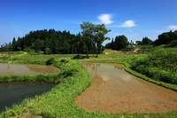 Rice Terraces of Yamakoshi village of Spring Stock photo [1564201] Niigata