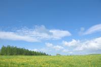 Dandelion field and blue sky Stock photo [1564234] Dandelion