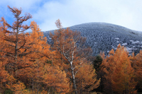 Fog and larch foliage of Tateshina Stock photo [1567611] Nagano
