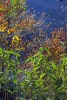 Suzutake and autumn forest Stock photo [1666716] Yamano