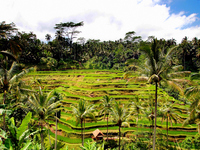 Bali Island Ubud hotels in tegalalang village rice terrace-terrace Stock photo [1668110] Asia